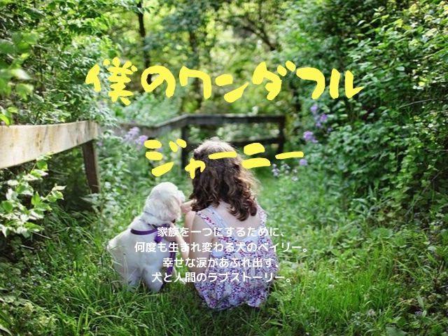 犬好きの為の映画「僕のワンダフル・ジャーニー」